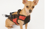 Tell me more about Pet Safety Harness and Adapter Combo