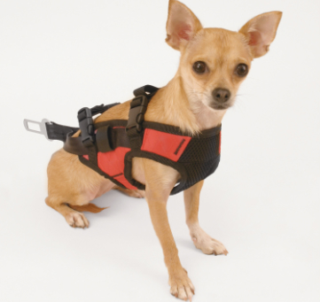Pet Safety Harness and Adapter Combo
